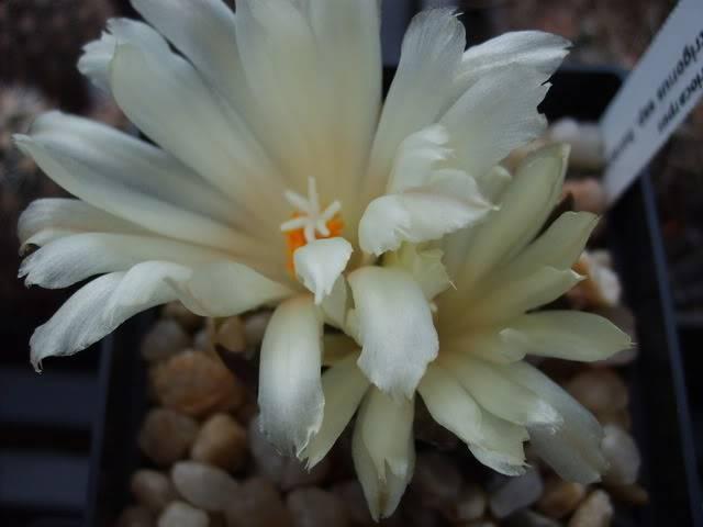 Blütensaison 2009 voll im Gange - Seite 12 SD532120