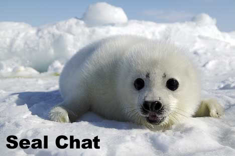 Seal Chat