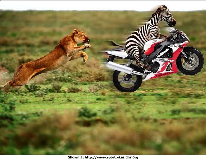 Mga nakakatawang Pics sa Net Funny