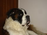 Barney Picture003-1