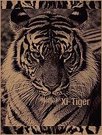 Xi-Tiger