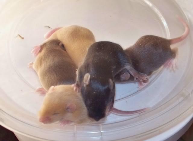 Tiny Harts Babies! 100_2565