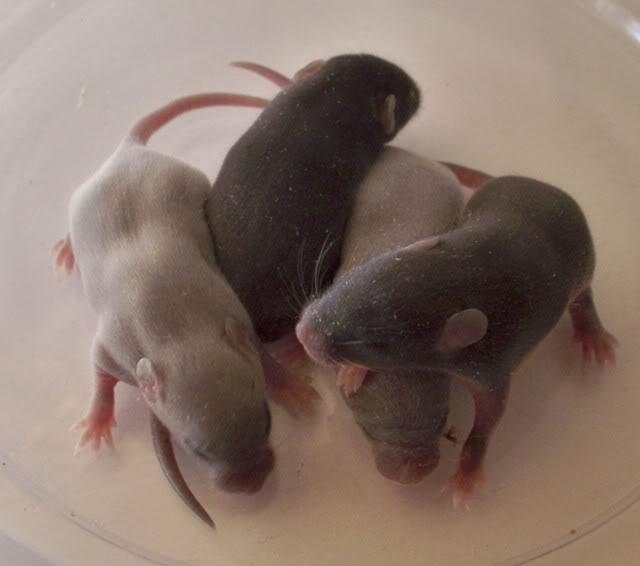 Tiny Harts Babies! 100_2566