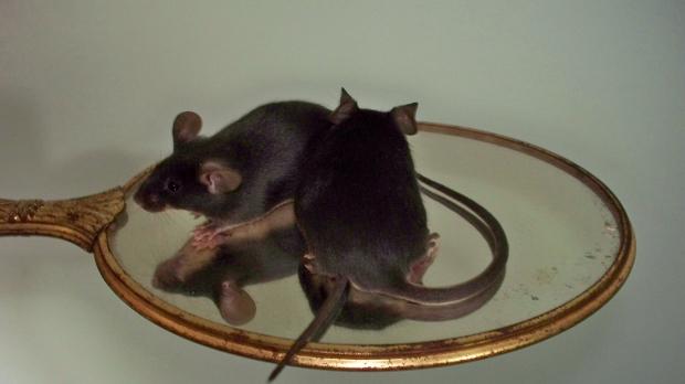 Runaway Mousery and Christina Fogu, Mice for Shipment 47762471-6447-4a11-84fe-e32e17f0c7e0_zpsf2a8b120