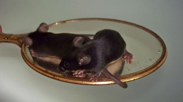 Runaway Mousery and Christina Fogu, Mice for Shipment 910de91e-3619-43b4-bb89-621d9d7db72f_zps214bb948