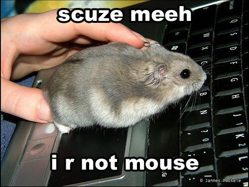 Funny Picture Topic Funny-mouse-picture-computer-mouse