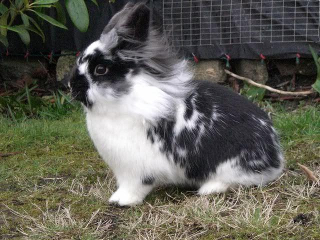 Forum Members Rabbits - Page 3 CIMG1706-1