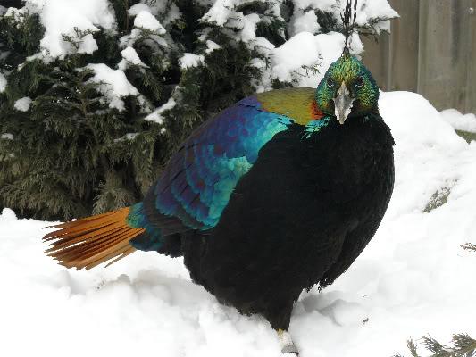 Razne ptice 0061-18