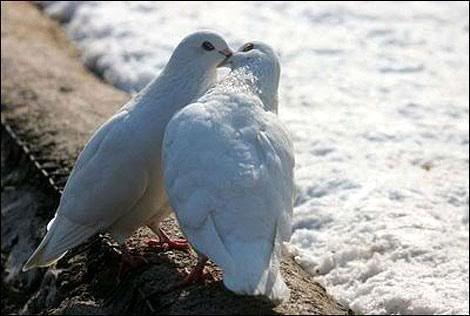 Love & Relationships Doves