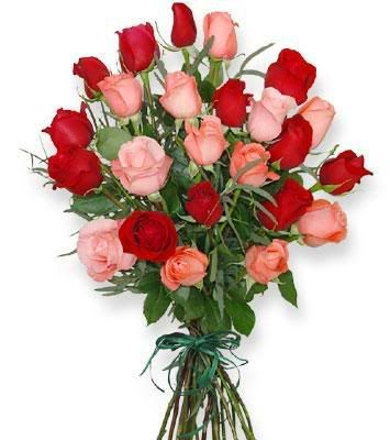 Una esperanza Rosas