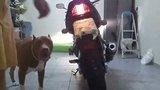 Manobrando a moto  Th_20121221_162038