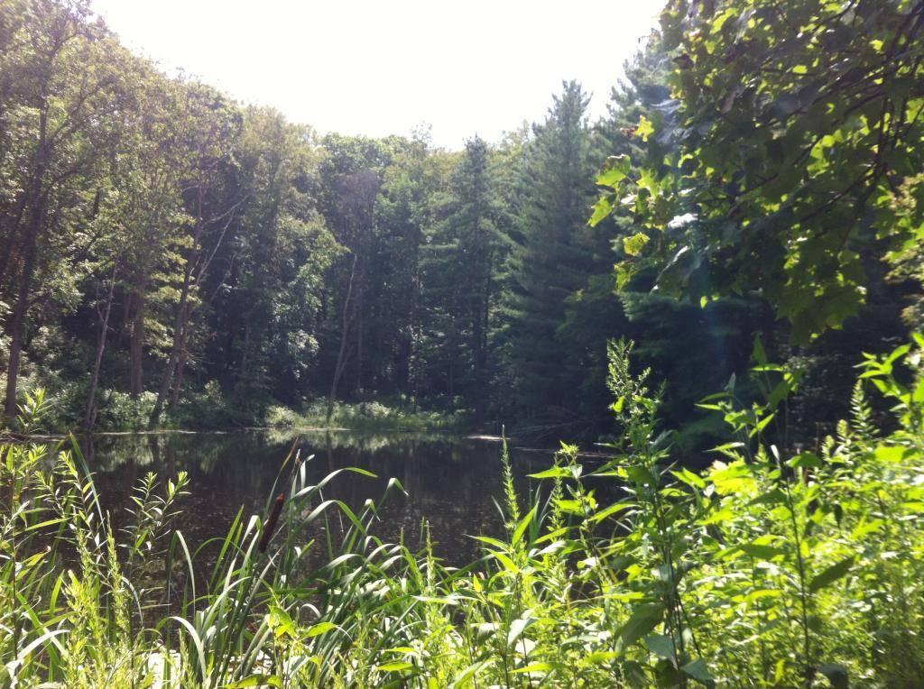 Wayne National Forest  - Page 2 337BF55F-80D6-4C3F-B89F-C78C3D696E6C_zpsmedffc5u
