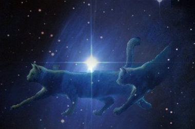 Starclan.png StarClan image by ceruleanflower