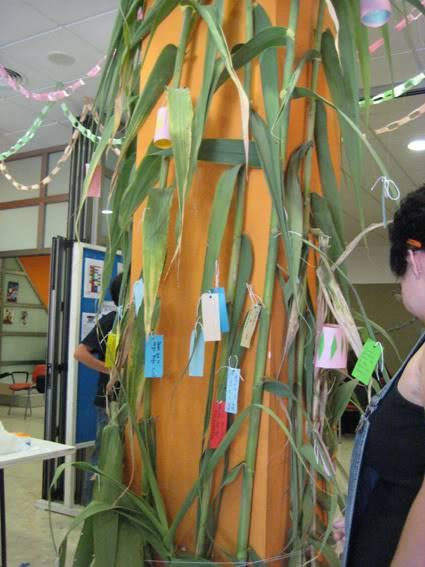 24h fiesta Tanabata IMG_1316