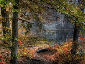 Bosque de Terra