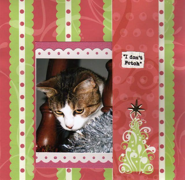 New 8 x 8 Cat album Idontfetch