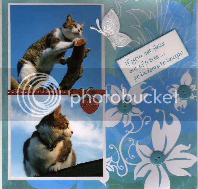 New 8 x 8 Cat album Ifyourcatfalls