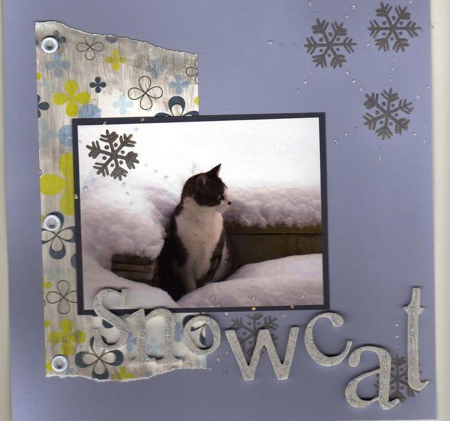 New 8 x 8 Cat album Snowcat
