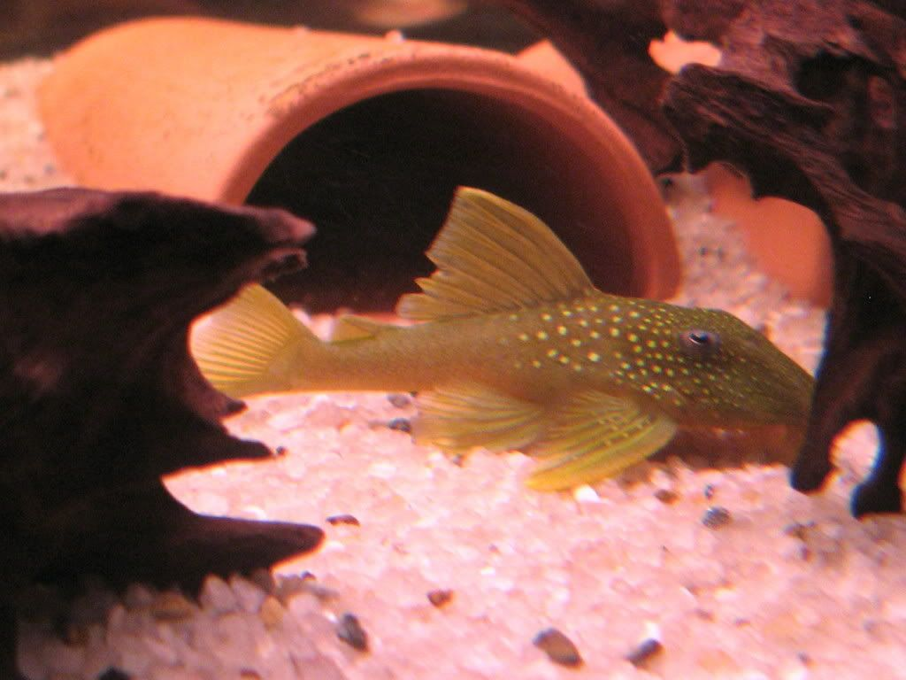 pictures of some of my fish IMG_1115