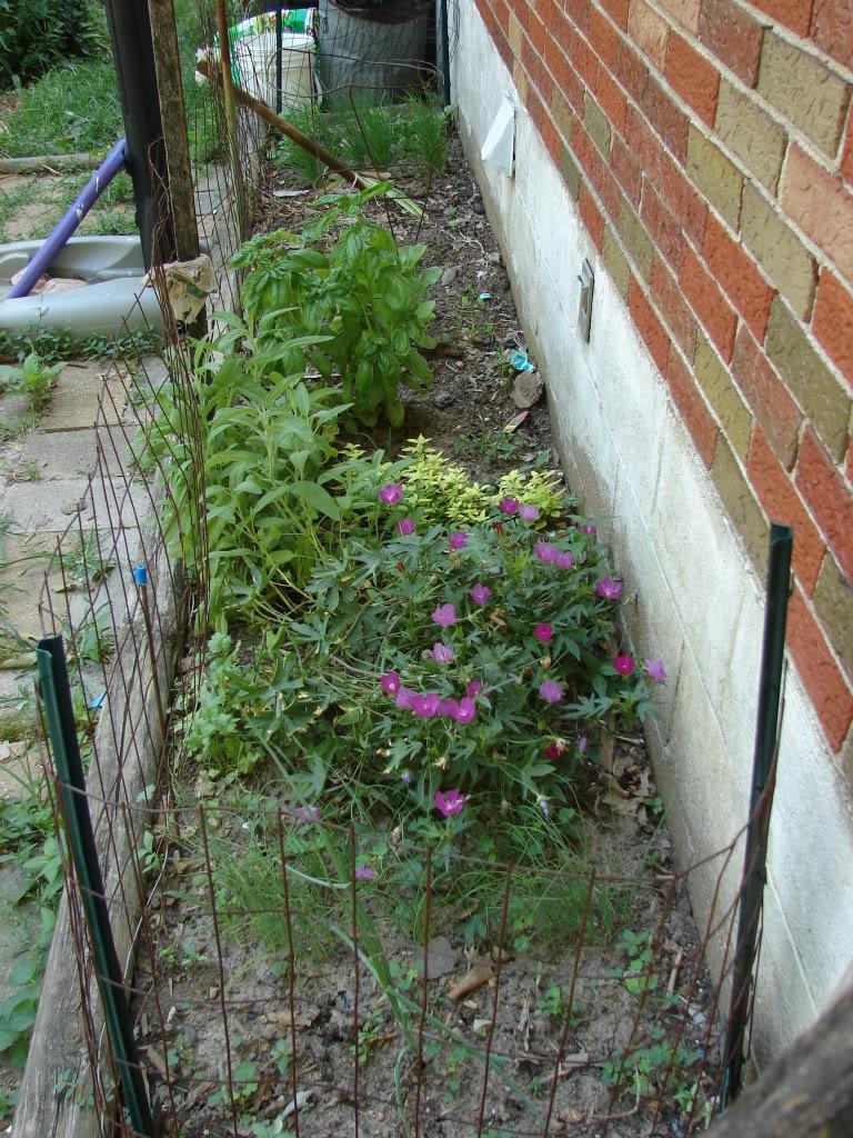 Garden 1 month old DSC03909