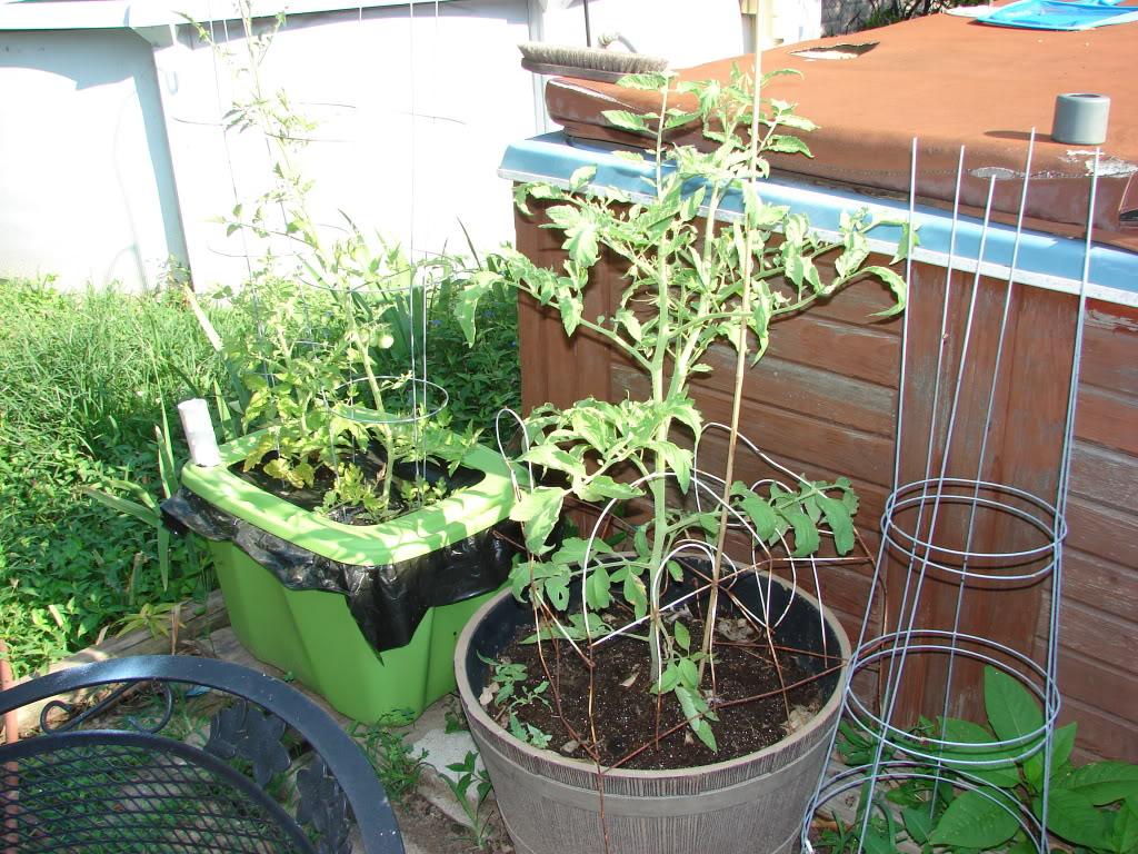 Garden 1 month old DSC03910