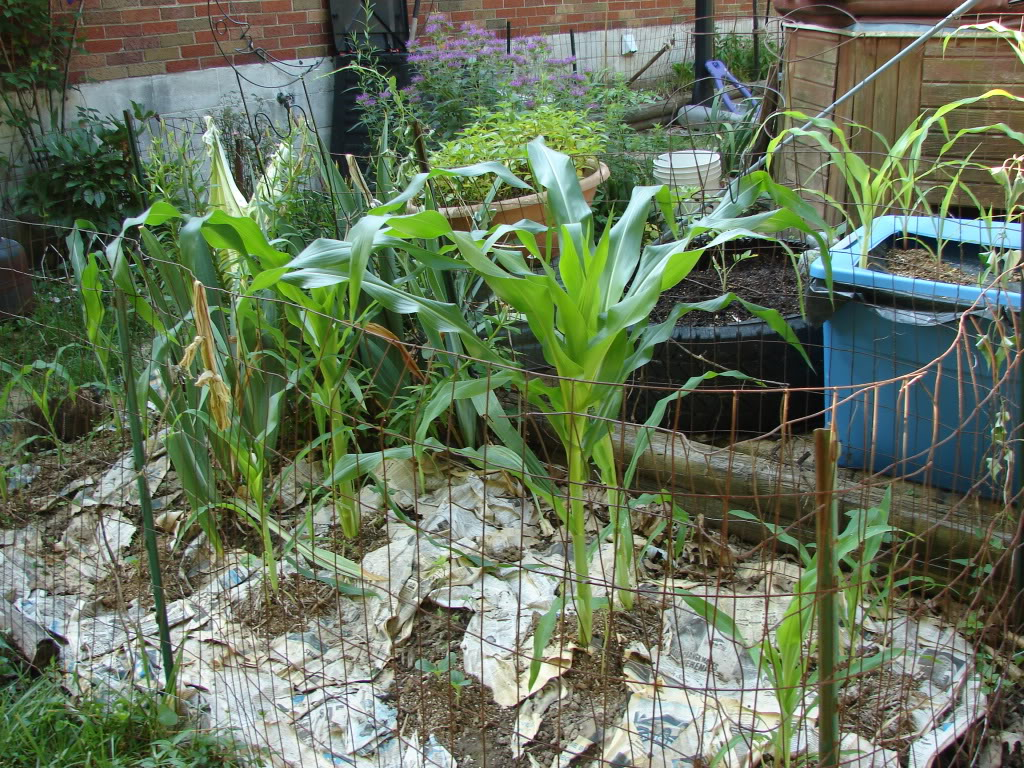 Garden 1 month old DSC03911