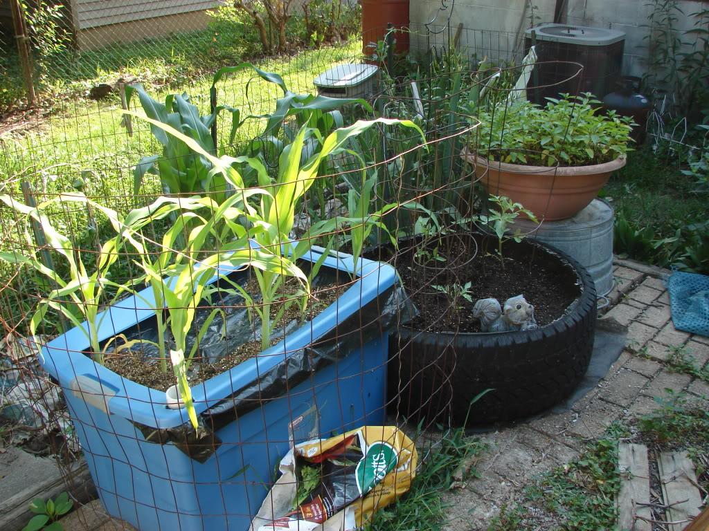 Garden 1 month old DSC03912