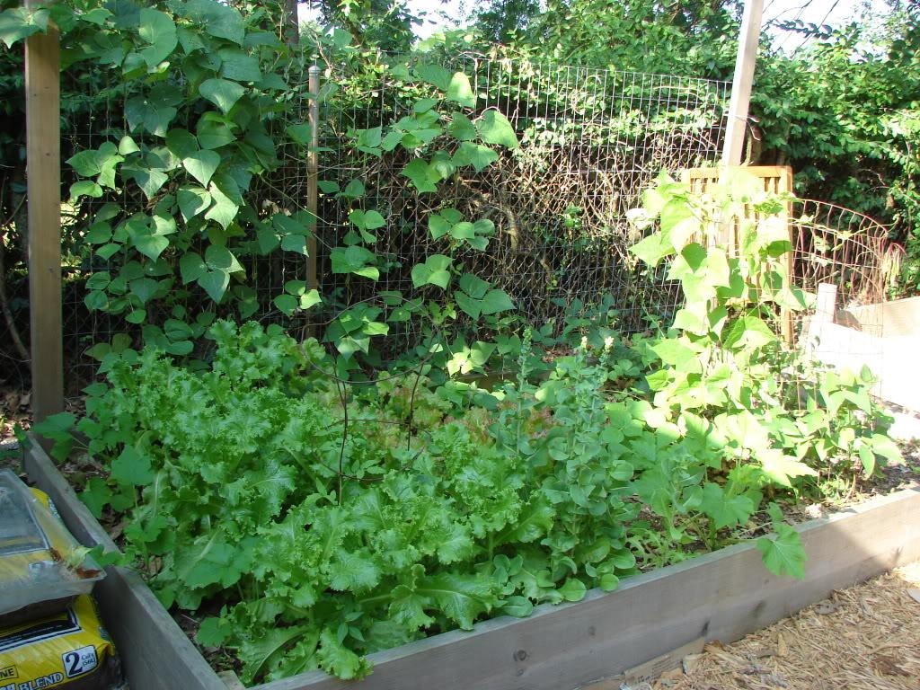 Garden 1 month old DSC03913