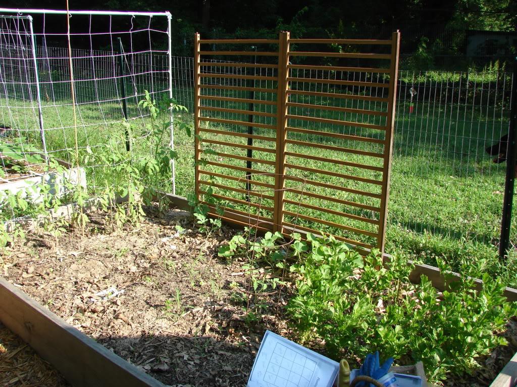 Garden 1 month old DSC03914