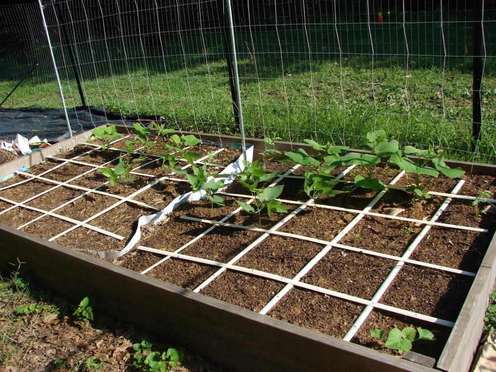 Garden 1 month old DSC03915