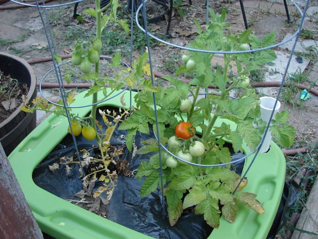 Garden 1 month old DSC03924