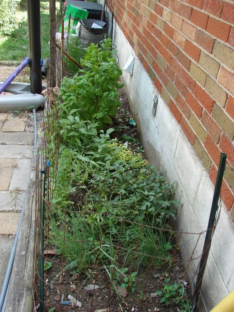 Garden 1 month old DSC03931