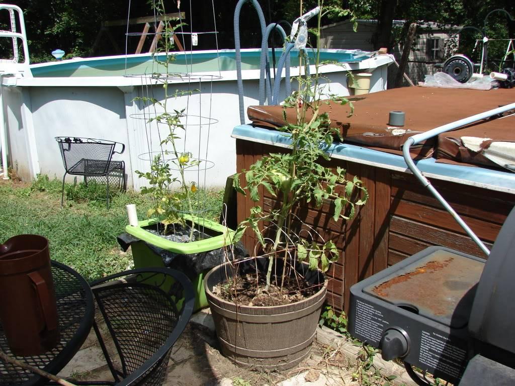 Garden 1 month old DSC03933