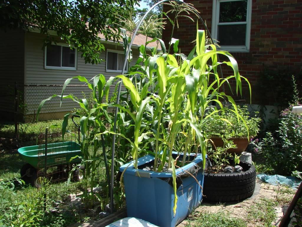 Garden 1 month old DSC03934
