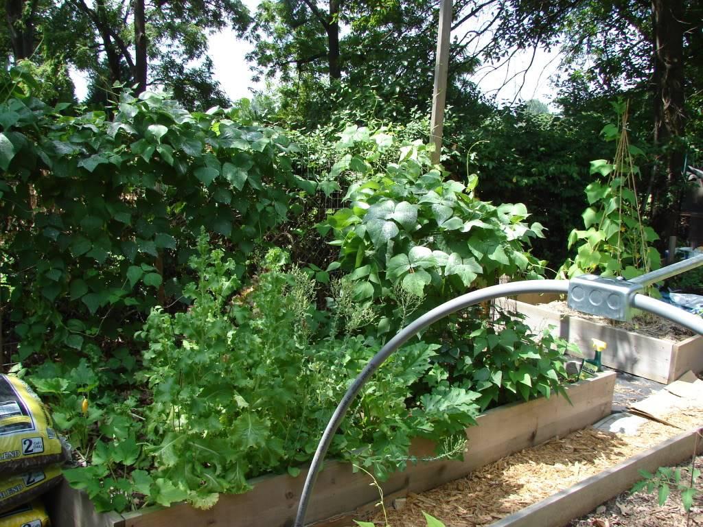 Garden 1 month old DSC03935