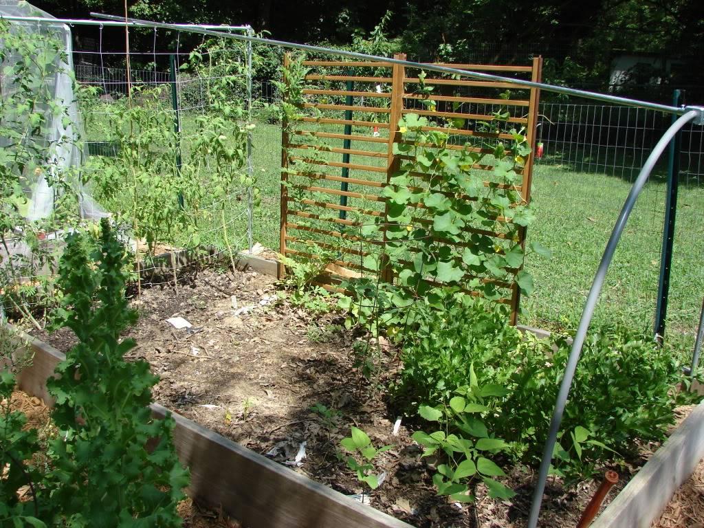 Garden 1 month old DSC03936