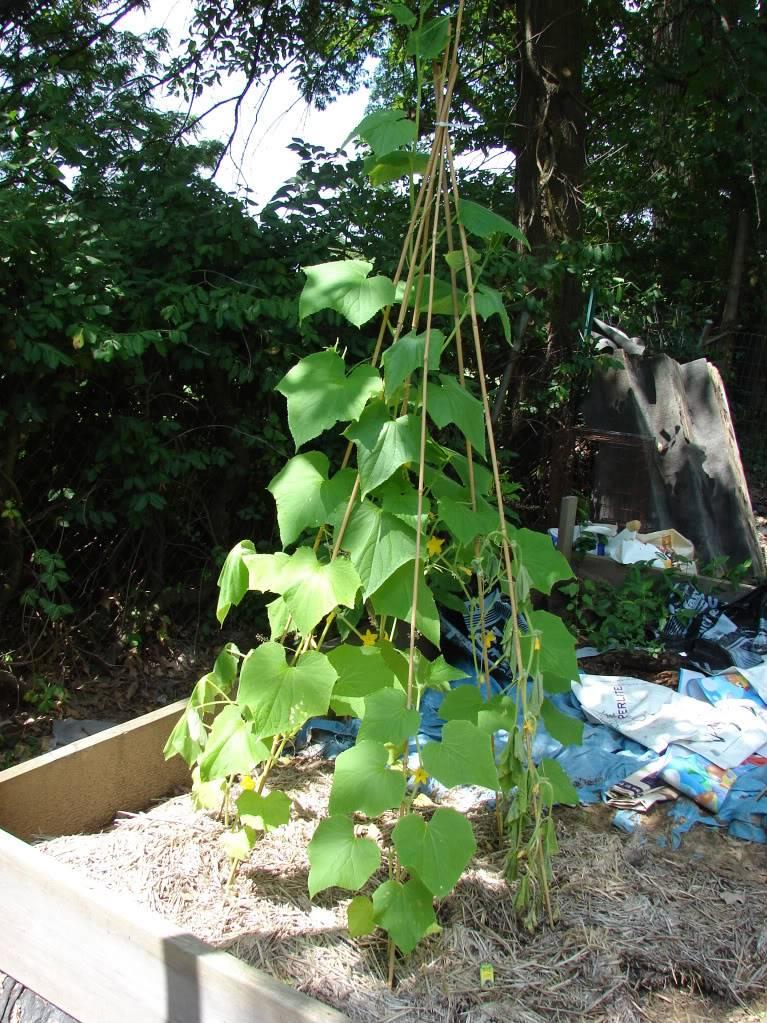 Garden 1 month old DSC03937