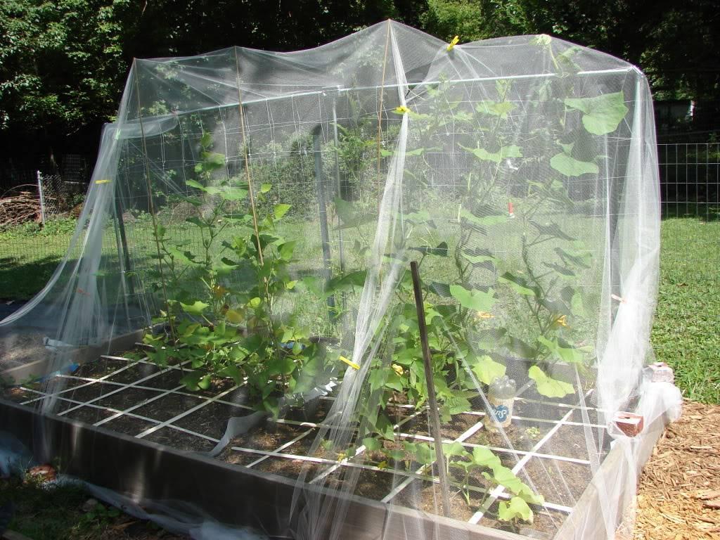 Garden 1 month old DSC03938