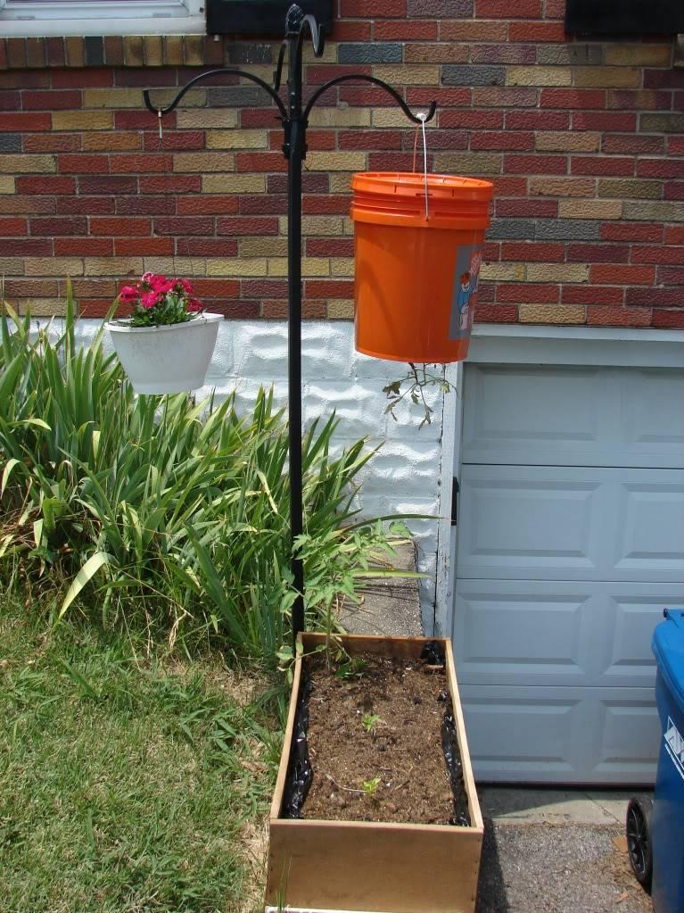 Garden 1 month old DSC03940
