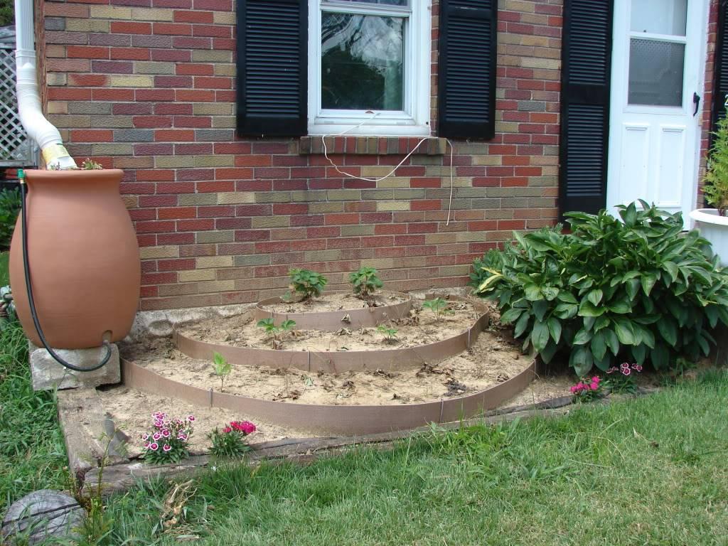 Garden 1 month old DSC03942
