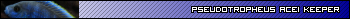 "Melanochromis Cyaneorhabdos ""Maingano"" Ubd9783tr7"