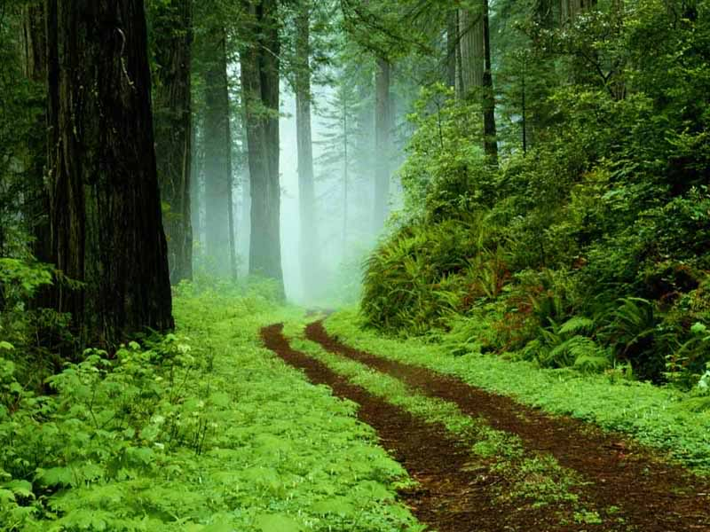 இயற்கை அழகு நிறைந்த காட்சிகள்  - Page 7 FOREST-RAIN-default-beautiful