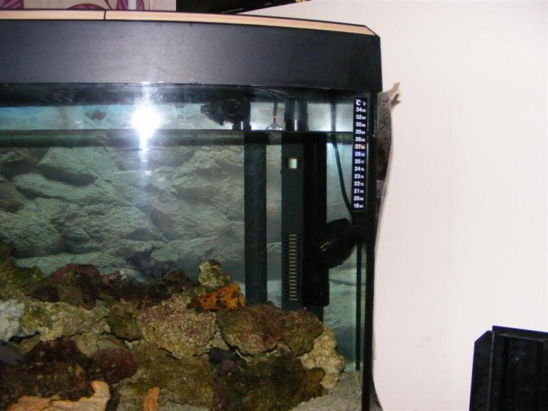 Fluval Vicenza sump build and diy sump info DSCF3174Large