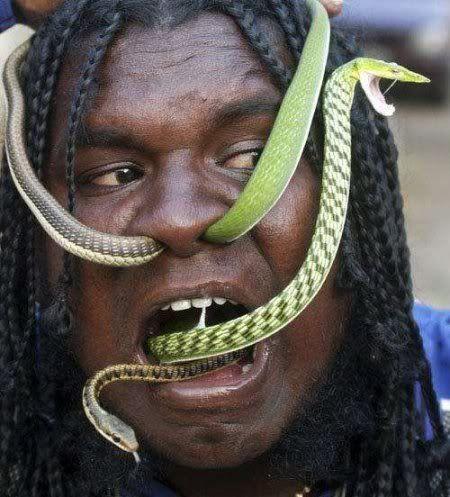 Votre animal préféré - Page 2 Snake_Man_04
