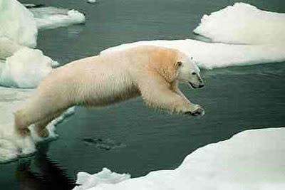 Animals - Page 2 Polarbear