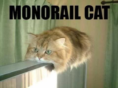 Serious cat Monorail