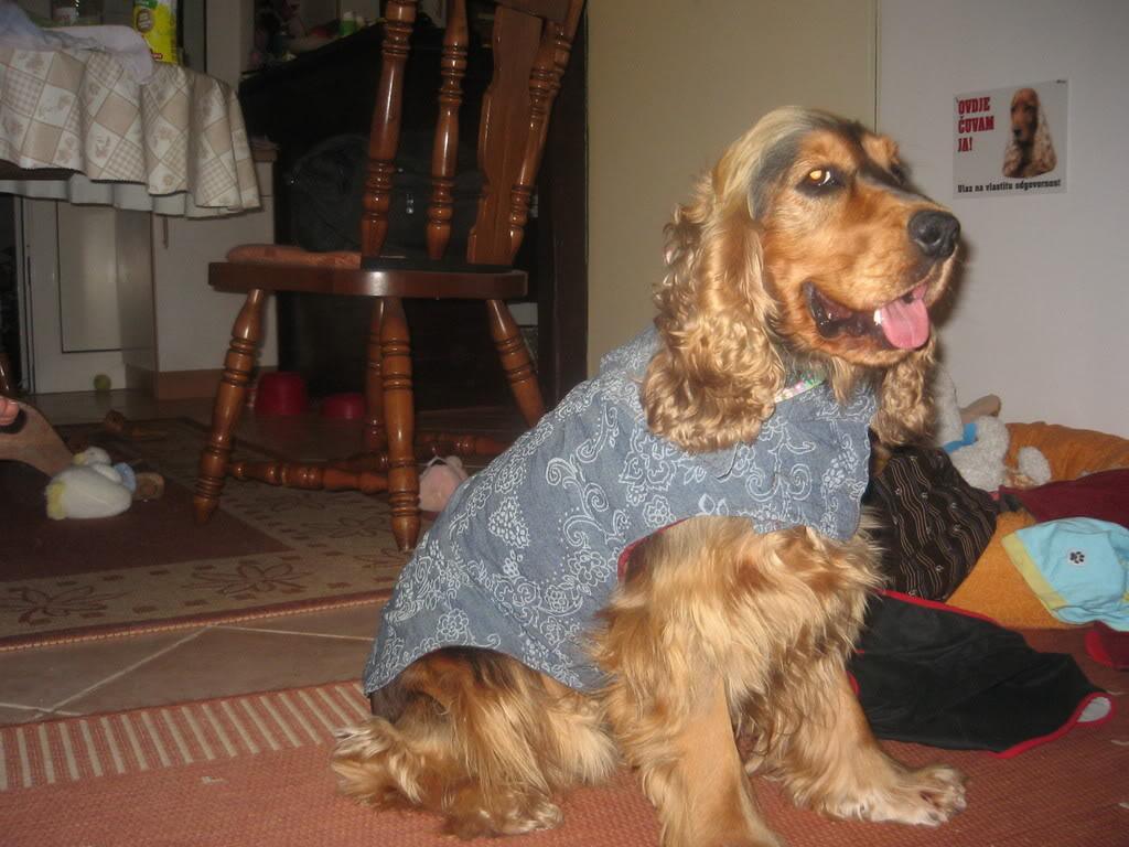 Odječa za pse Kaputici001