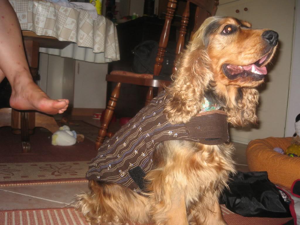 Odječa za pse Kaputici002