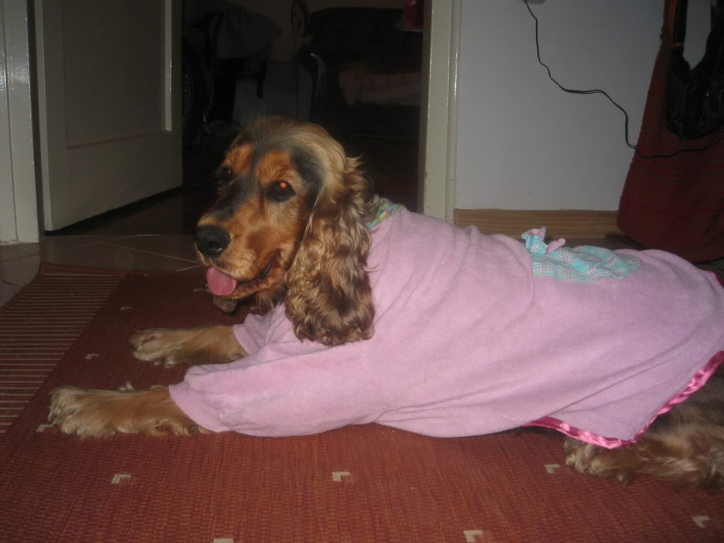 Odječa za pse Kaputici003
