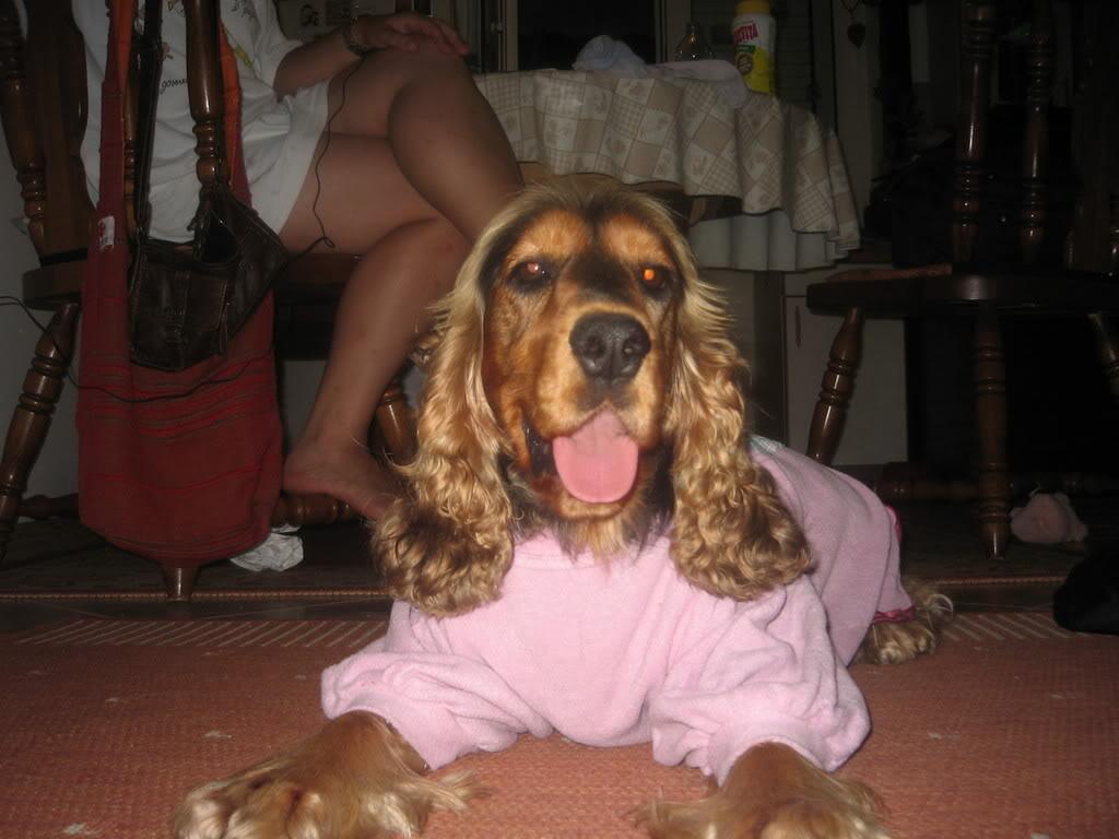 Odječa za pse Kaputici005